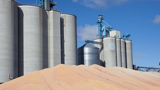 Grain Fume jpg